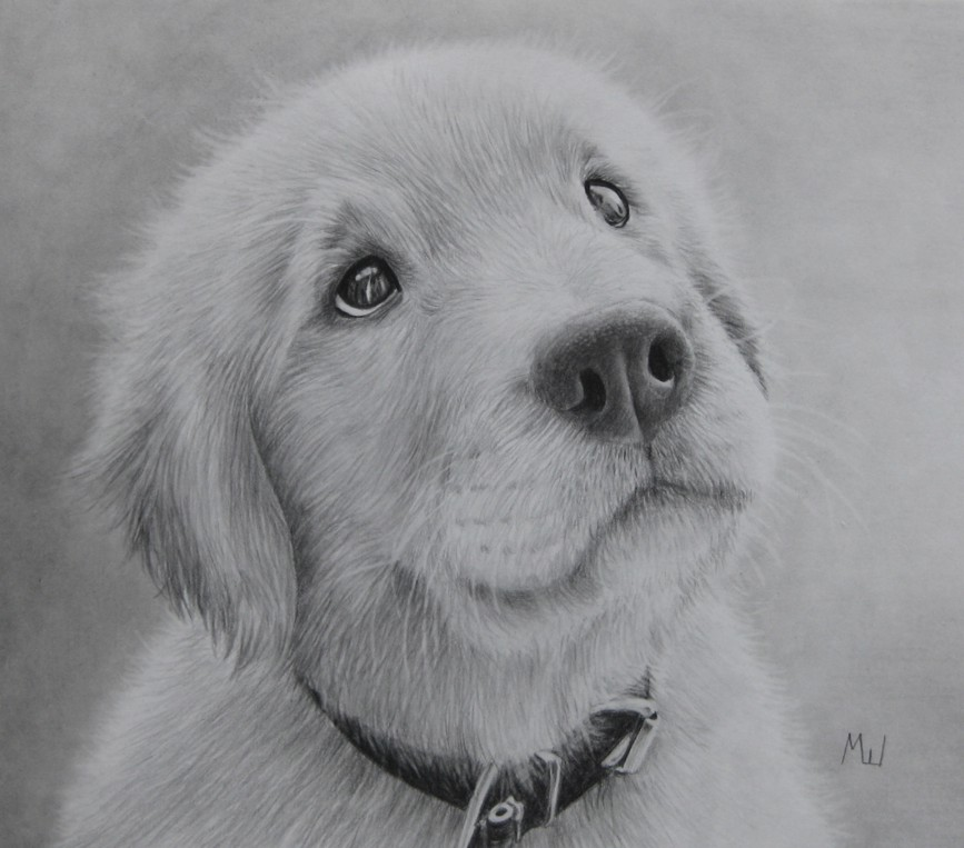 the pensive puppy pencil drawing of a golden retriever miroslav